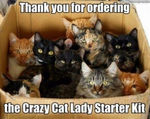 cat-lady-starter0kit